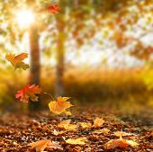 Beautiful autumn landscape with yellow trees and sun. Colorful foliage in the park. Falling  leaves  poster