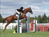Chestnut Jumping
