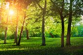 Summer Landscape, Colorful Summer Park In Sunny Summer Weather At Sunset. Summer Trees In The Park I poster