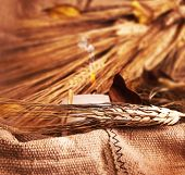 foto of ear candle  - Wheat on canvas with candle thanksgiving decoration autumn background harvest concept - JPG