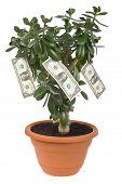 Dollar Plant With Money Bills