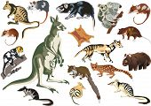 illustration with set of marsupial animals isolated on white background
