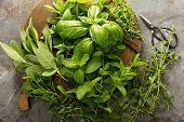 Fresh Basil, Mint, Oregano Thyme And Sage, Cooking With Herbs poster