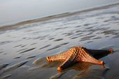 Stranded Starfish