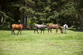 Group Of Horses In Gredos Natural Park