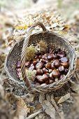 Chestnuts In a wicker Basket