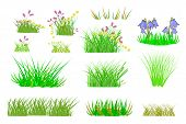 Grass Set Isolated On White Background. Collection With Summer Green Grass And Flowers. Realistic Gr poster