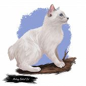 Mekong Bobtail Cat Domesticated Cat Breed Isolated On White Background. Digital Art Illustration Of  poster