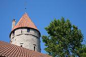 fort near green tree in Tallinn, Estonia, from below