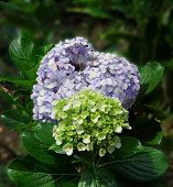 Flower In Park At Sunny Summer Or Rainy Day. Flower For Postcard Beauty Decoration And Agriculture C poster
