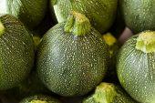 round zucchini / round courgettes