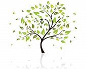 image of tree leaves  - Vector illustration of tree with falling leaves - JPG