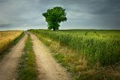 Dirt Road Through Fields And A Lonely Tree To The Horizon poster