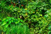 Tropical Garden Full With Diverse Exotic Plant Species, Wild Exotic Vegetation, Nature Background poster
