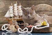Cat and marine paraphernalia
