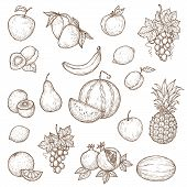 Farm, Garden And Tropical Fruits Vector Sketches. Isolated Ripe Apple, Banana, Pomegranate Or Garnet poster