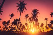Tropical Palm Tree On Sunset Sky Cloud Abstract Background. poster