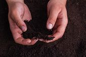 Male Hands With Soil, Close-up. Grabbing Ground Soil Dirt. poster