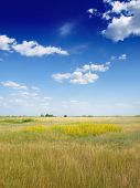 grass stretching to the horizon and blue sky with little clouds. Nature background for any purpose