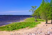 Baltic Sea. Picturesque Beach On The Gulf Of Finland In Summer, St. Petersburg, Russia poster