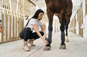 Cheerful Woman With Long Dark Hair Putting Grey Bandages On Purebred Stallion Legs To Protect From I poster