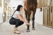 Beautiful Dark Haired Girl In White T-shirt And Black Trousers Bandaging Horse Legs For Protection.  poster