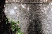 Pebble Washout Finish Whitewash Wall with Tree Plant Background