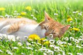 pic of tabby-cat  - young cat in the grass - JPG
