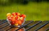 Bowl Of Sweet Rainier Cherries In Rain