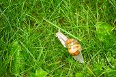 Big Snail Grass With Raindrops