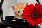 Kitten In Black Kettle