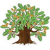 Oak Tree With Acorns, Vector Illustration