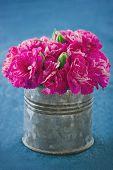 Carnation Flowers On Demin Blue Background