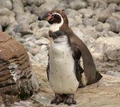 Madre y bebé pingüinos