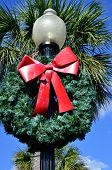 stock photo of snowbird  - An artificial Christmas wreath in front of a real palm tree in Southeast Georgia - JPG