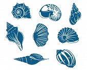 stock photo of scallop shell  - Blue shells and mussels set isolated on white background - JPG