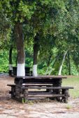 Tree, Bench And Table.