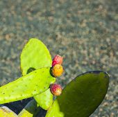 pic of nopal  - green cactus leave with fruit in detail - JPG