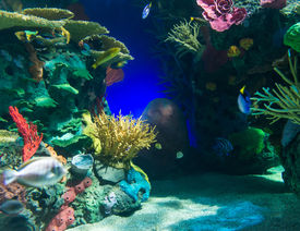 stock photo of aquatic animals  - Coral reefs are underwater structures made from calcium carbonate secreted by corals - JPG