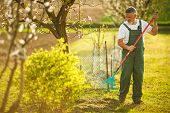 Portrait of a handsome senior man gardening in his garden, on a lovely spring day (color toned image