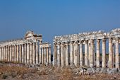 image of cardo  - Pompey made Apamea  - JPG