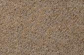Porouse Scrub Texture Seamless Background, Foam Stone Limestone Or Volcanic Pumice