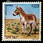 Onager (equus Hemionus)