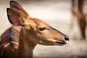 stock photo of bambi  - Portrait of bambi - JPG