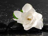 Single of white gardenia with therapy stones