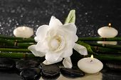 spa concept �¢�?�?gardenia flower with candle and bamboo grove