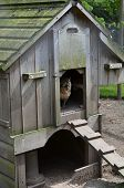 stock photo of hen house  - Wooden chicken hen house with hen entering - JPG
