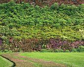 Plant Wall Vertical Garden