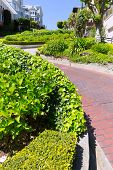 San Francisco Lombard Street gardens in California USA