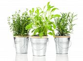 Sage, Thyme And Rosemary Herb Plant Growing In A Distressed Pewter Pot